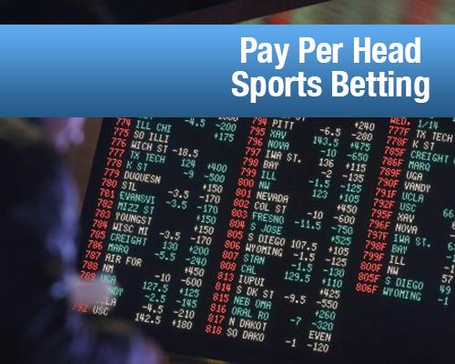Pay Per Head Sports Betting